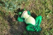 Frosch liegend