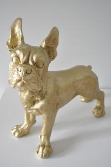 Französische Bulldogge GOLD 35 cm x 32 cm groß Designer Deko Figur